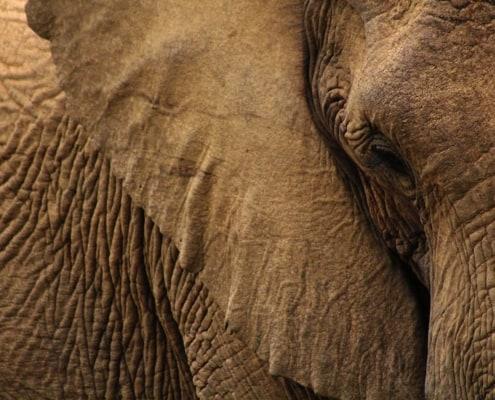 Elephant photo, elephants never forget